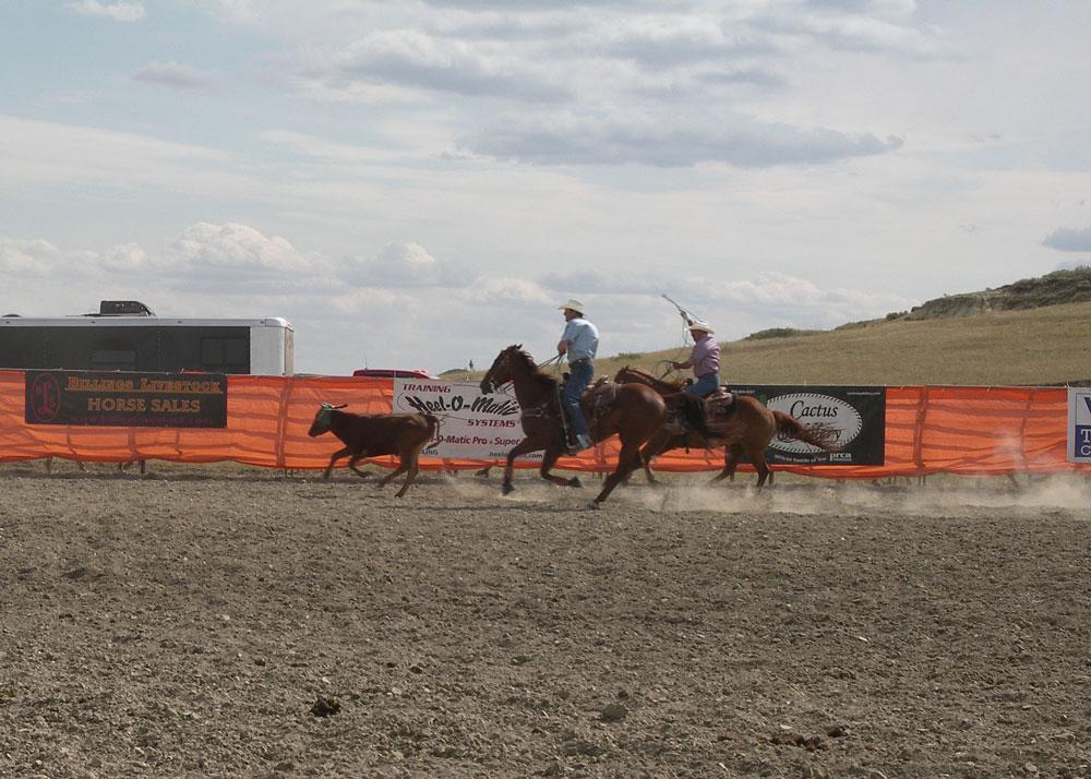 BGGR-Rodeo