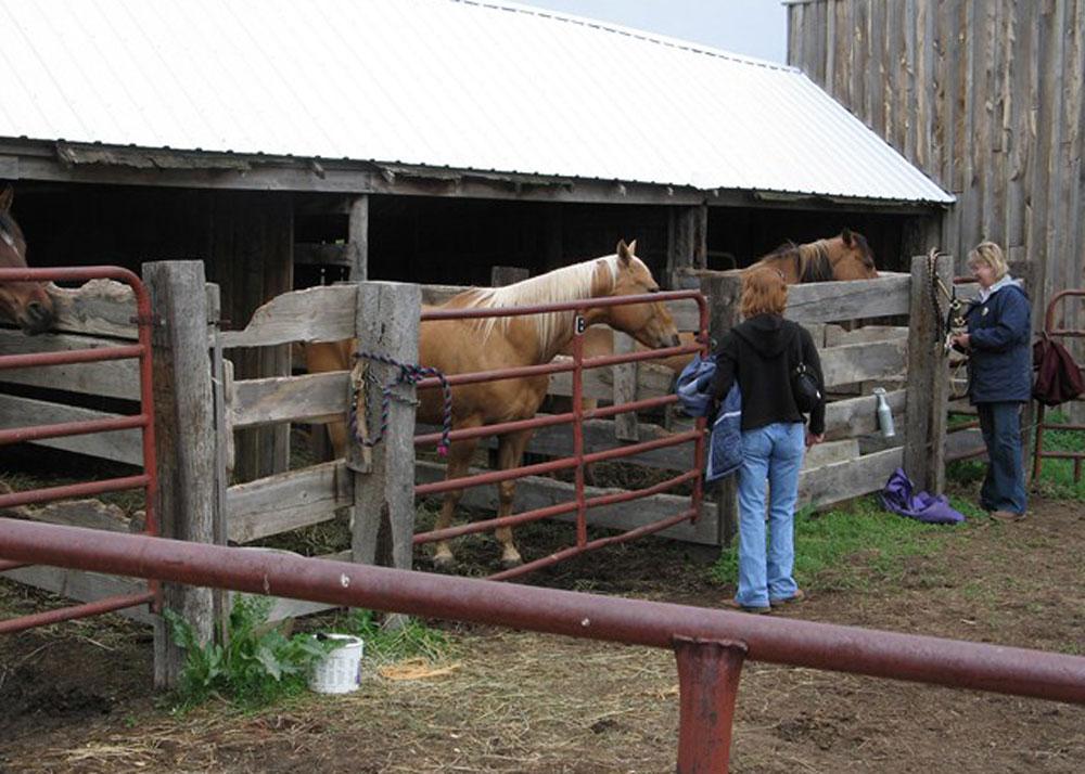 BGGR-horse-Corrals
